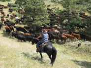 Last minute Wyoming Ranch special offer