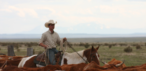 1385486266_chico_basin_ranch_cowboy_with_cows