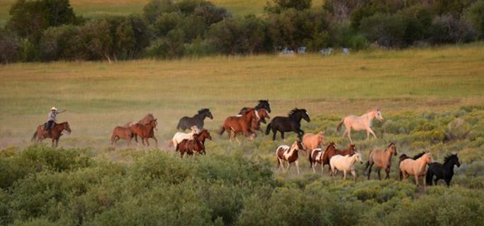 laramie river ranch wyoming