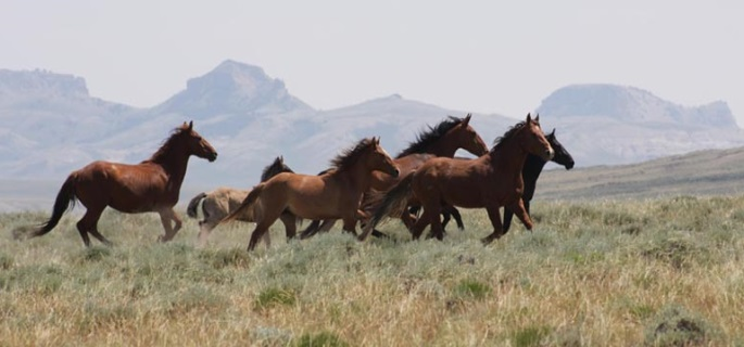 See the Mustang in Wyoming on horseback