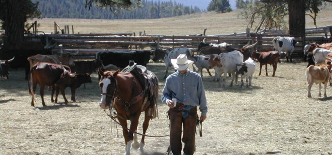 Learn to western ride in Idaho