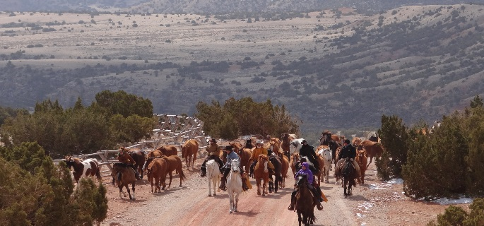 Wyoming horse drive with american round-Up