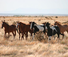 Gather horses at Chico Basin ranch during your stay