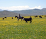 Colorado rounding up cattle with American Round-Up