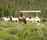 Nine quarter circle ranch horses