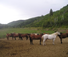 Good horses at this ranch in Colorado for riding and exploring the mountains