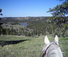New Haven Working Ranch Horse and View