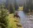Hideout Resort Ranch Wyoming with American Round-Up