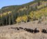 Cattle roundup at the Hideout luxury Guest Ranch with quality accommodation
