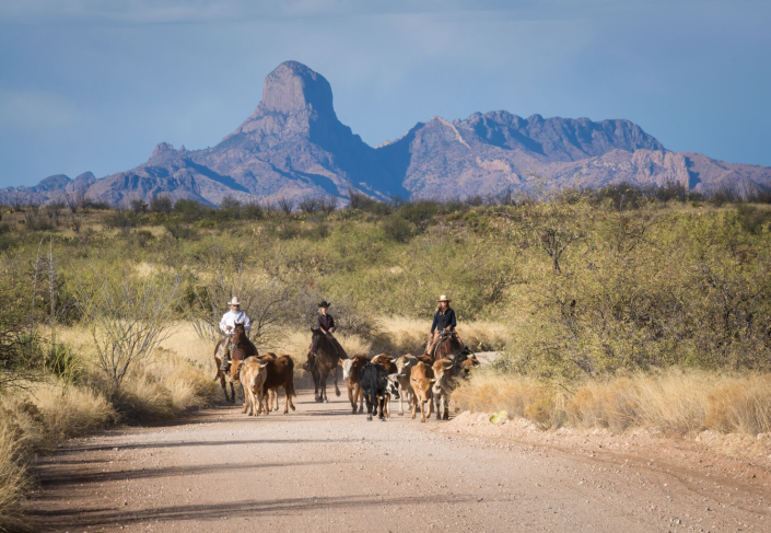 Cowboy & Dude Ranch Vacation - Rockin R Ranch | Dude